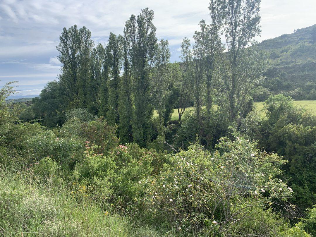 10 Rutas naturaleza a pie